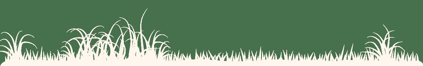 frise herbes